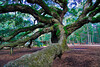 Angel Oak :